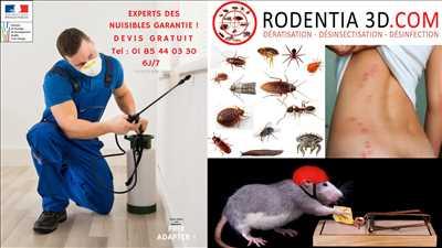 Photo Désinsectisation n°127 dans le département 94 par RODENTIA SERVICES 3D / RATUAL