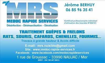 Photo Désinsectisation n°259 dans le département 33 par MRS SAS        Médoc Rapide Services