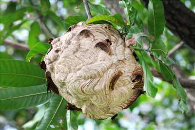 Exemple Destruction de nids de guêpes n°269 zone Loire par May